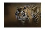 Bengal Stare Giclée par Jai Johnson