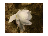 Cape Jasmine Gardenia 1