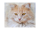 Orange Tabby Cat Portrait