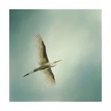 Egret Overhead