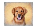 Young Golden Retriever Portrait