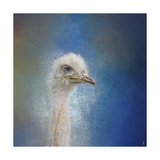 Blue Eyed Beauty Ostrich