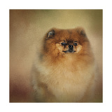 Proud Pomeranian