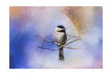 Winter Morning Chickadee