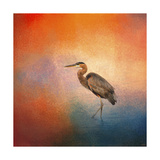 Sunset Heron