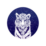 Tiger and Stellar Sky