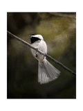 A Song in Your Heart Chickadee