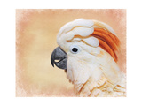 Salmon Crested Cockatoo Portrait 1