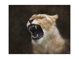Angry Lioness Portrait