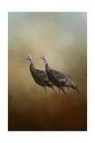 Wild Turkey at Shiloh