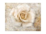 Vintage Rose 5