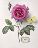Floral Decoupage I