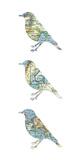 Map Birds