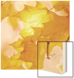 Autumn Leaves in Soft Sunshine III