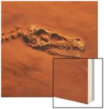 Velociraptor Skull and Neck in Sand