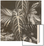 Leaves  Hilo  1979