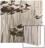 Reeds amd Lily Pads  Alaska  1973