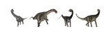 Brachiosaurus  Dicraeosaurus  Diplodocus and Spinophorosaurus