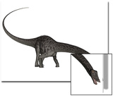 Diplodocus Dinosaur with Head Down
