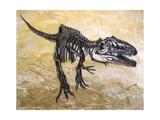 Giganotosaurus Dinosaur Skeleton