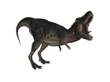 Tarbosaurus Dinosaur Roaring  White Background