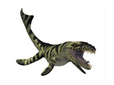 Dakosaurus  White Background