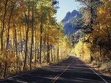 A Road Through the Autumn Colors of Aspen Trees in the June Lake Loop
