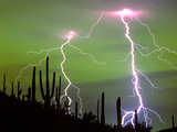 Lightning Strikes with Saguaro Cacti  Sonoran Desert Tucson  Arizona