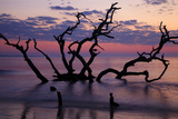 USA  Georgia  Jekyll Island  Driftwood Beach at Sunrise