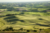View from Steptoe Butte  Palouse Country  Washington