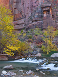 USA  Utah  Zion National Park the Narrows with Cottonwood Trees in Autumn