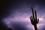 Saguaro Cactus in Lightning Storm Sonoran Desert Tucson  Arizona