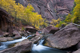 USA  Utah  Zion National Park Canyon Waterfall with Cottonwood Trees