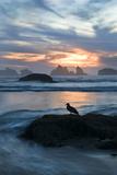 USA  Oregon  Bandon Beach Seagull on Rock at Twilight