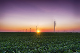 USA  Indiana Soybean Field and Wind Farm at Sundown