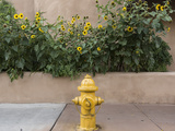 USA  New Mexico  Santa Fe Fire Hydrant Downton Santa Fe  New Mexico