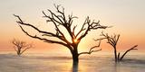 USA  North Carolina Sunrise at Botany Bay Plantation
