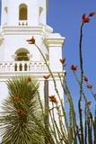 Ocotillo Blooming at San Xavier Del Bac Mission  Tucson  Arizona