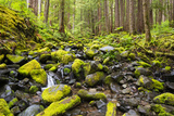 Wa  Olympic National Park  Sol Duc Valley  Stream with Mossy Rocks
