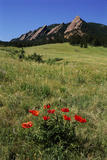 USA  Colorado  Boulder Flatirons and Poppies at Chautauqua Park