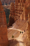 Utah  Bryce Canyon National Park  Hikers on Navajo Loop Trail Through Hoodoos