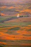 Summer Wheat  Barley and Lentil Fields  Washington  Palouse Area