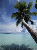 Palau  Micronesia  Palm Tree at Palau Lagoon