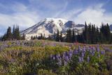 Mount Rainier National Park  Mount Rainier
