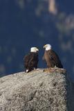 Bald Eagle Pair on Boulder