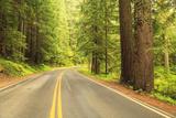 Old Growth Forest  Grove of the Patriarchs  Mt Rainier National Park  Washington