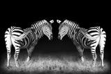 Black and White Mirrored Zebras