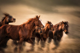 Running Horses  Blur and Flying Manes
