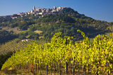 Harvest in the Vineyards of Monte Falco