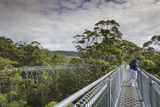 Australia  Walpole Nornalup  Valley of the Giants Tree Top Walk